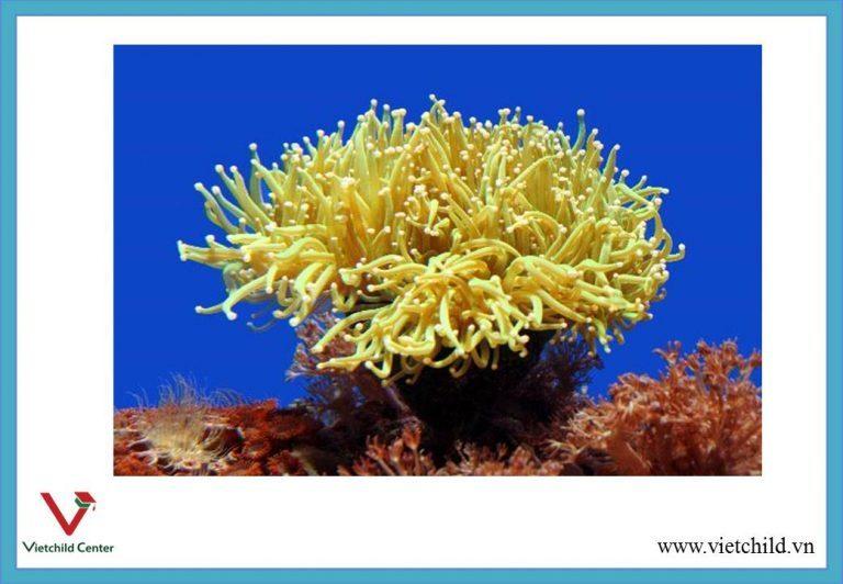 sea-anemone